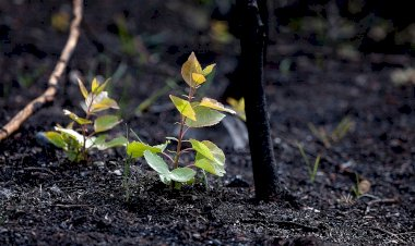 http://cyprustodayonline.com/replanting