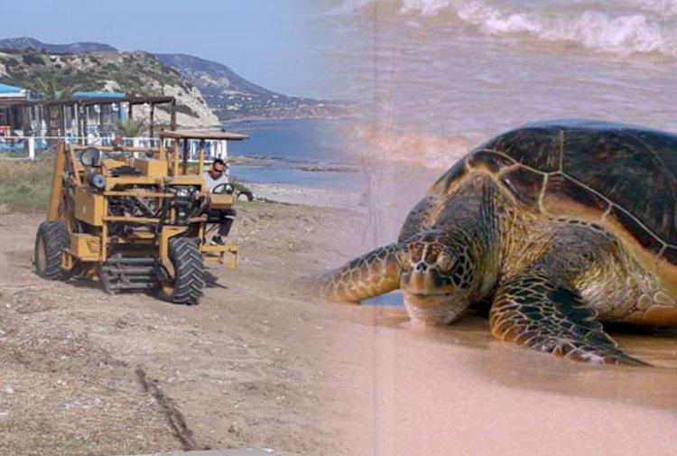 Watch those turtles!