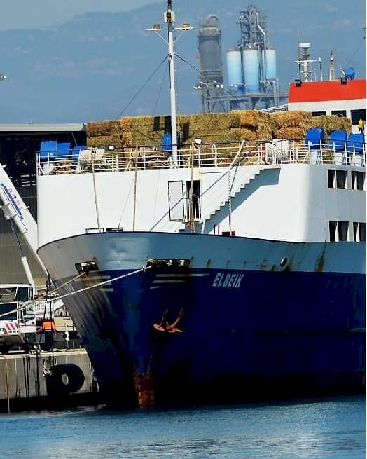 Sick cattle on ship helped by TRNC