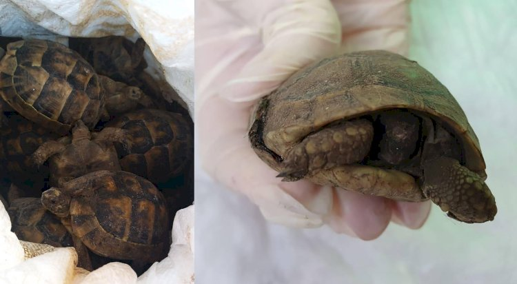 Over 200 tortoises found in cargo ship